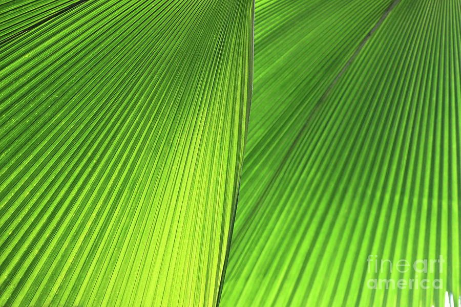 Palm Photograph - Big Fans Of Nature by Karen Adams