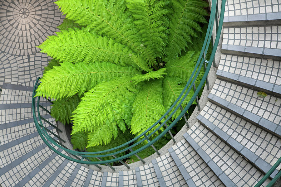 Big Green Fern In The Middle Of A Photograph by Henrik Johansson, Www.shutter-life.com