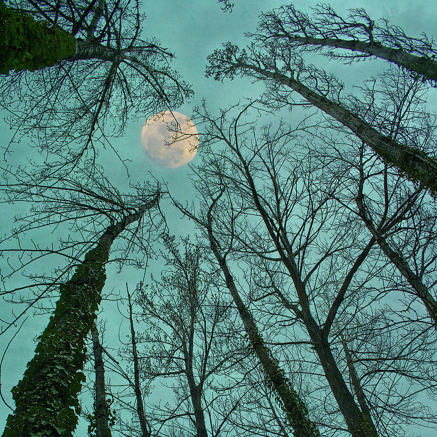 Big Moon Over The Trees Photograph by Núria Talavera