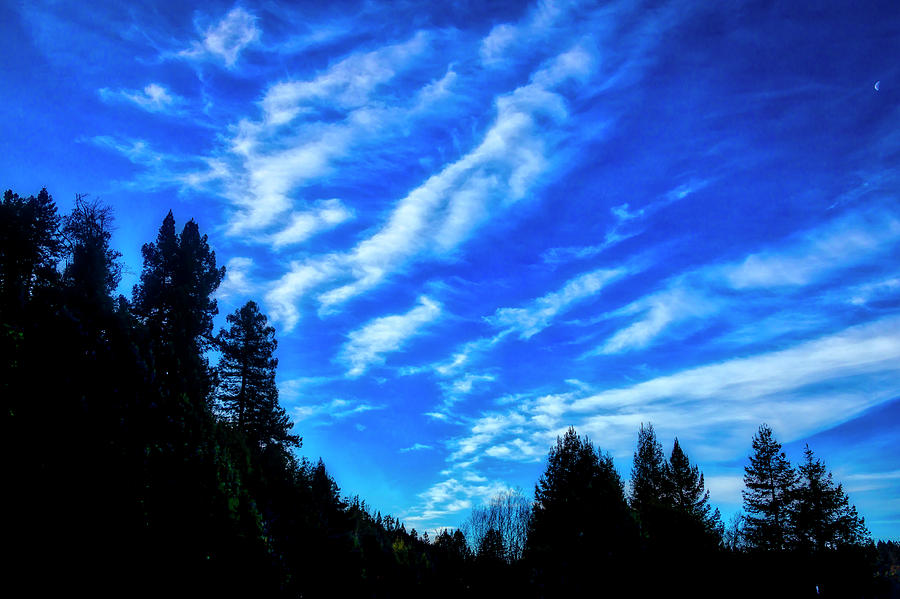 Clouds Photograph - Big Sky And Trees by Garry Gay
