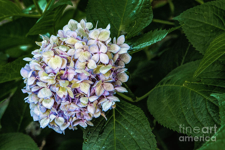 Summer Colors Photograph