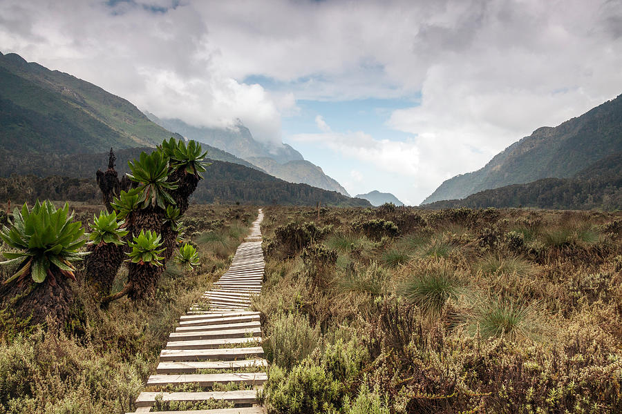 Bigo Bog, Rwenzori Mountains, Uganda Photograph by Christopher Kidd