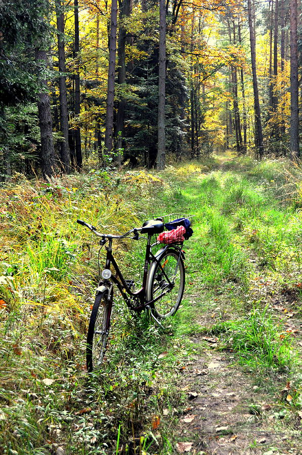 Bike in the Forest by Henryk Gorecki
