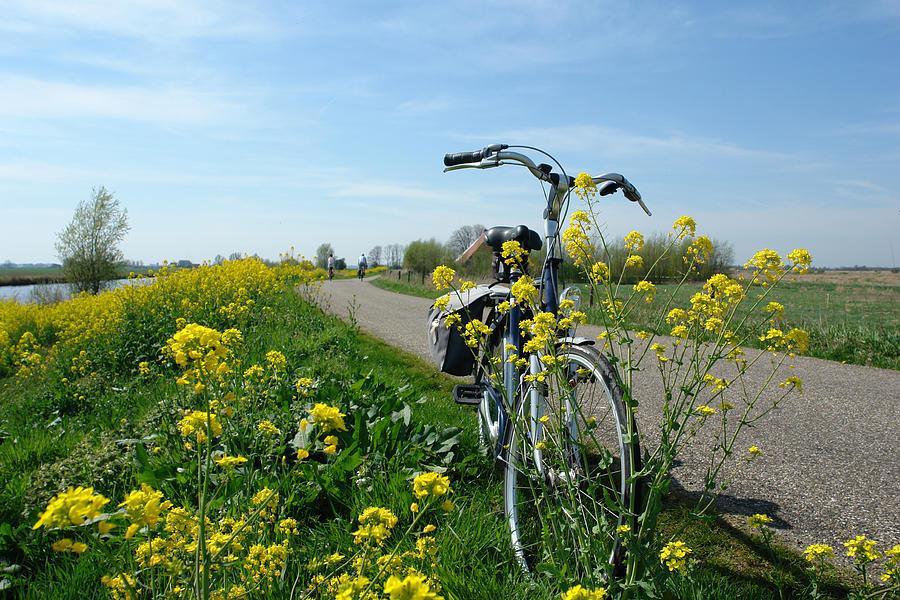 Bike On The Dike Photograph by Mgfoto
