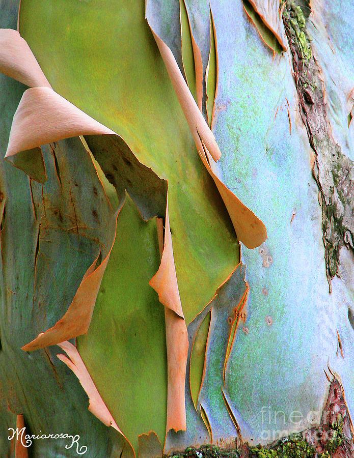 Birch Bark by Mariarosa Rockefeller