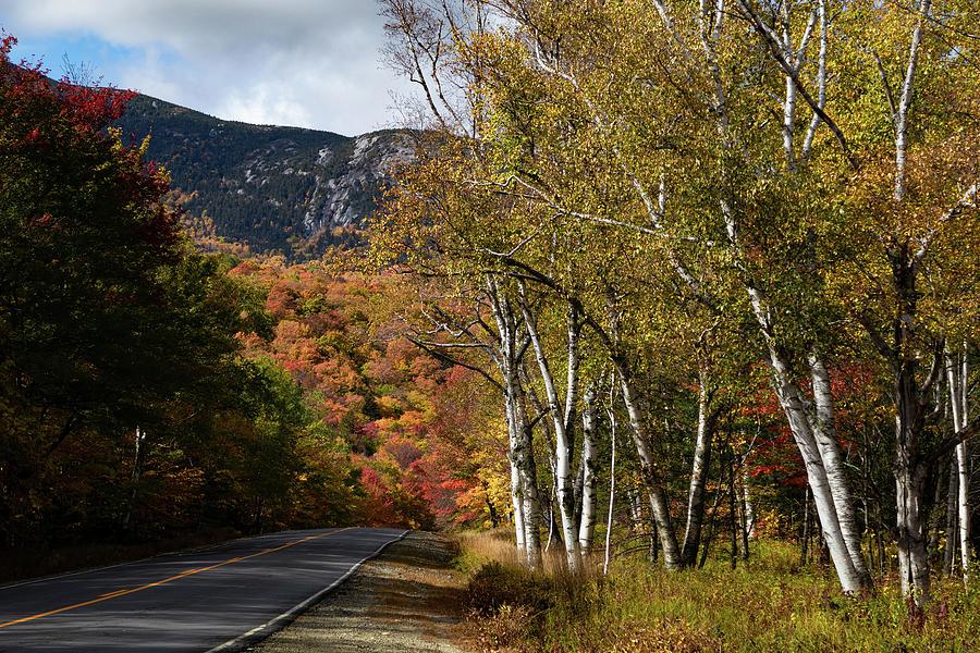 Birch Fall Colors in Grafton Notch by Jeff Folger