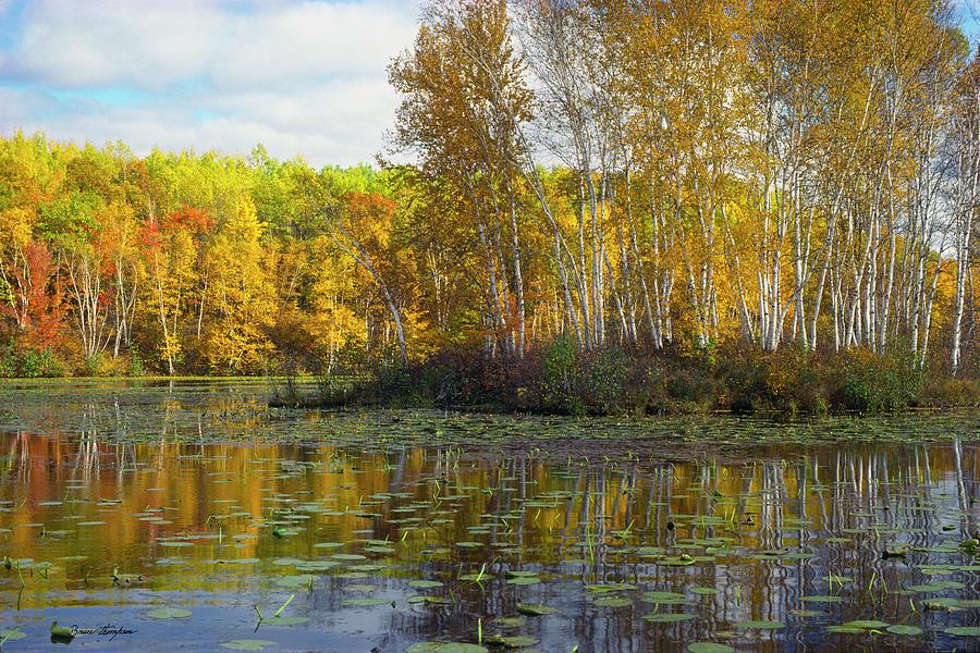 Birch Island by Bruce Thompson