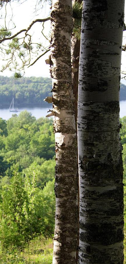 Birch Moor by Dylan Punke