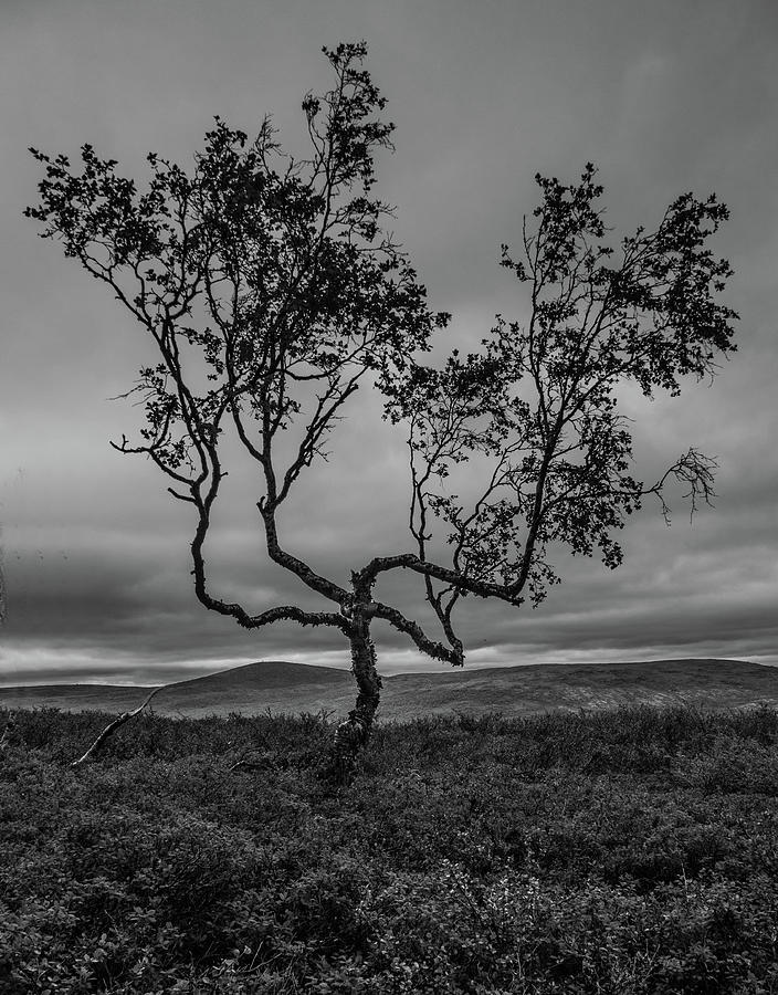 Birch of Four Winds by Pekka Sammallahti