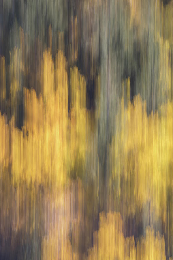 Birch Trees In The Fall  Photograph by K Pegg