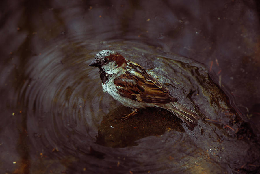 Bird Bath by Traci Asaurus