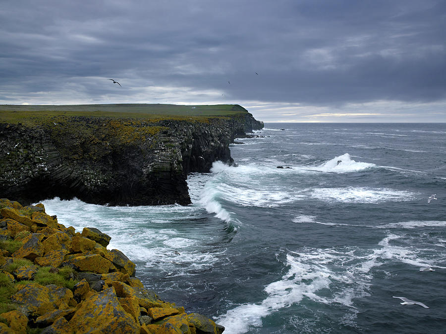 Bird Flying Over Rugged Coastline Photograph by Arctic-images