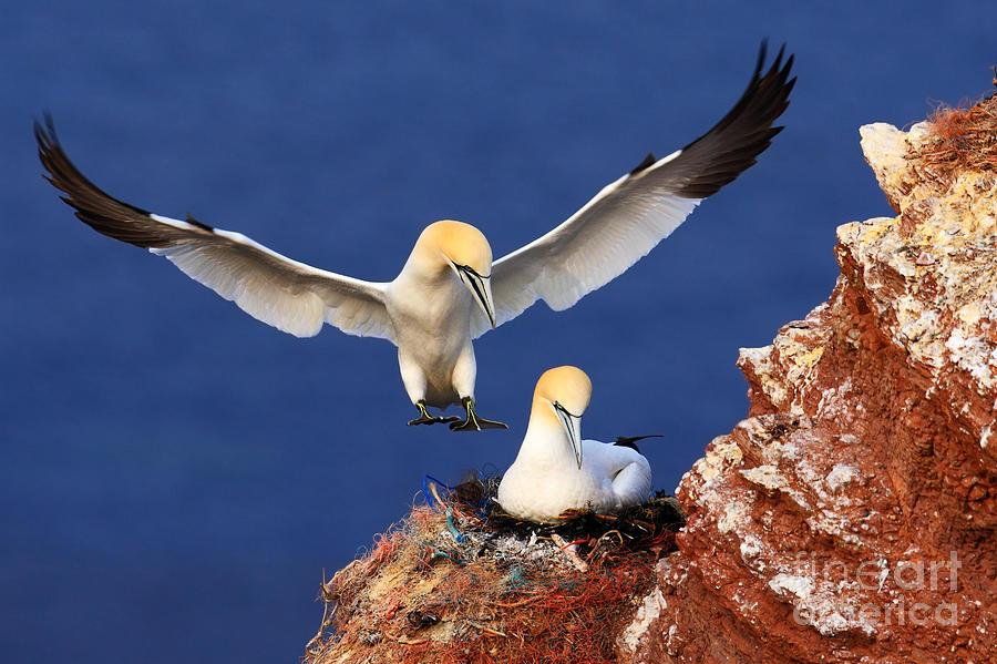 Beak Photograph - Bird Landind To The Nest With Female by Ondrej Prosicky