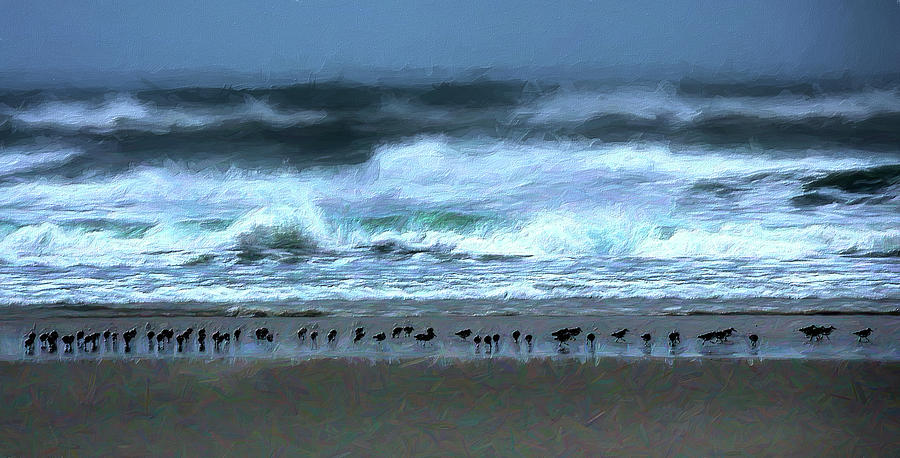 Bird Line in the Surf Line AP by Dan Carmichael