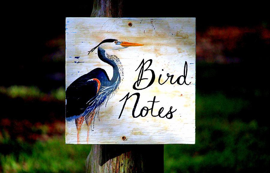 Bird Photograph - Bird Notes Sign by Cynthia Guinn