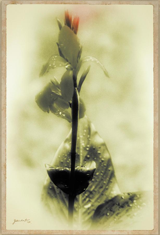 Bird of Paradise Flower by Gerlinde Keating - Galleria GK Keating Associates Inc