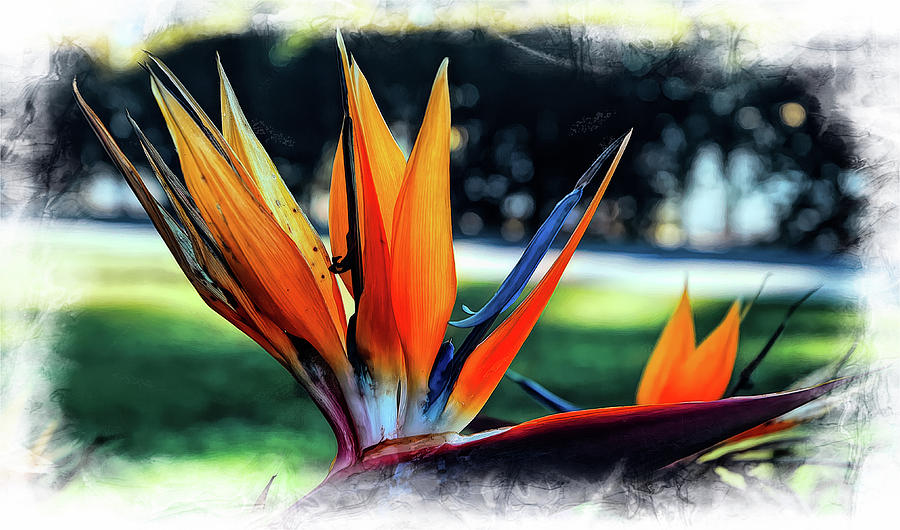Bird Of Paradise by PAUL COCO