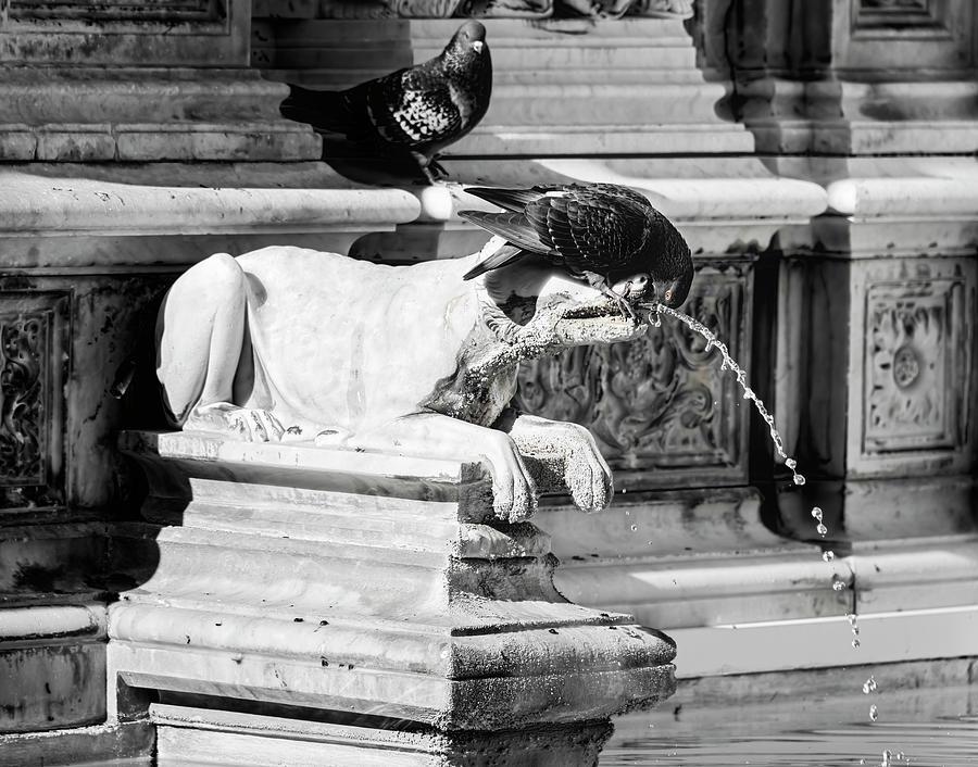 Bird on a Fountain Siena Italy by Joan Carroll