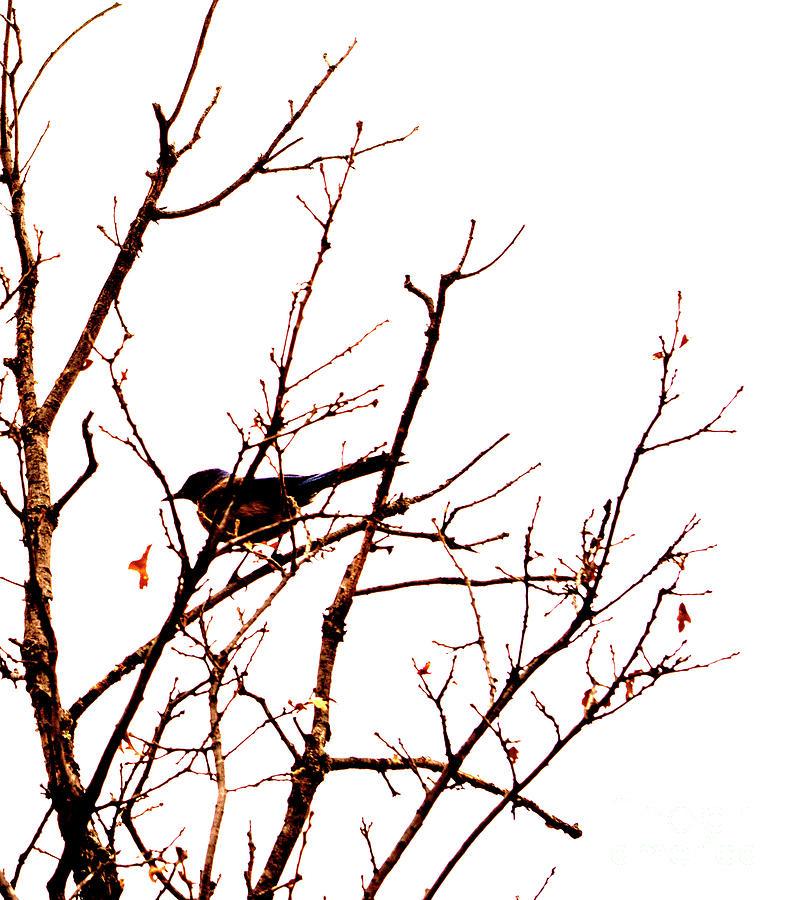 Bird on a Tree by Patricia Awapara
