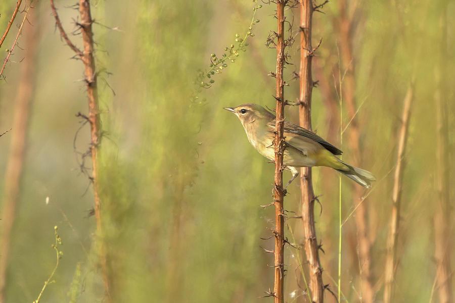 Bird on Branch by Dorothy Cunningham