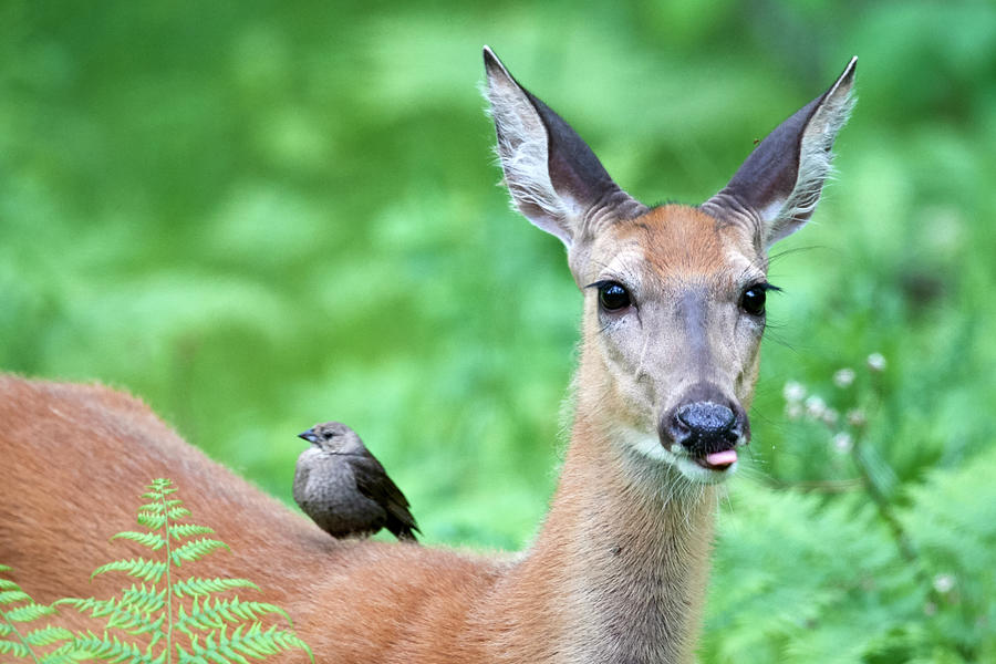 Bird on Deer by Paul Freidlund