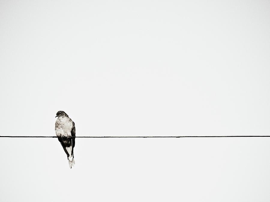Bird On Power Line Photograph by Photograph By Ryan Brady-toomey
