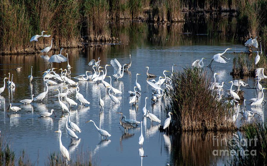 Bird Paradise by Odon Czintos