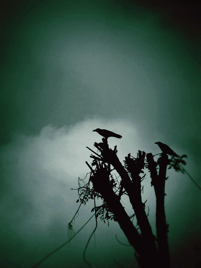 Bird Silhouette Photograph by Photography By Zeeshan