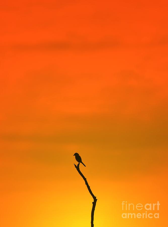 Splendor Photograph - Bird Silhouette - Wildlife Background - by Stacey Ann Alberts