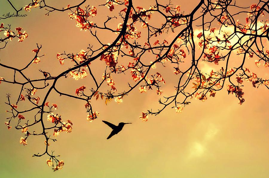 Bird Singing In The Morning Sky Photograph by Autumnn