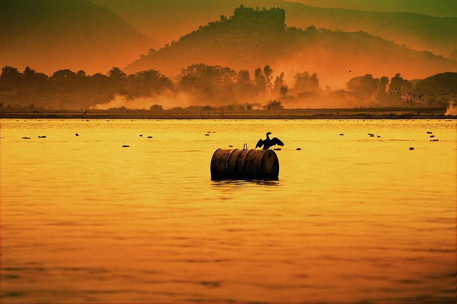 Bird Sitting On Drum Photograph by Pushp Deep Pandey / 2kphotography