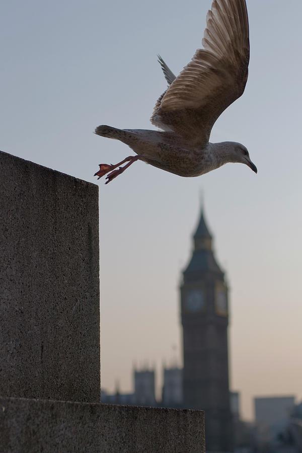 Bird Takeoff Photograph by Photograph © Jon Cartwright