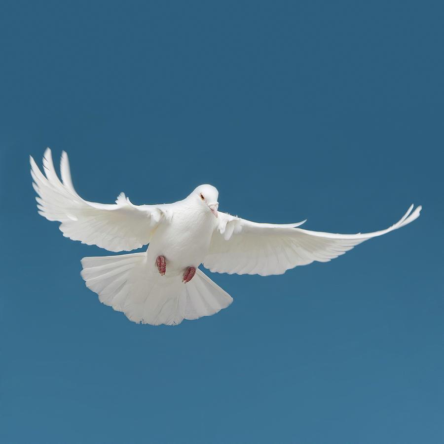 Bird Photograph by Tetra Images