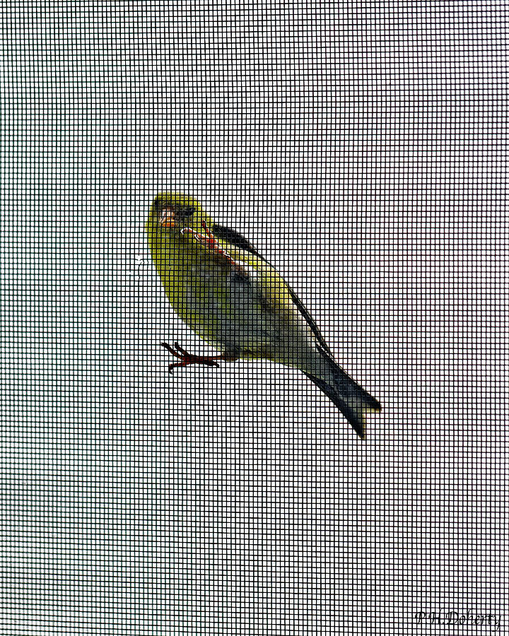 Bird Watching Photograph - Bird Watching Reversed by Phill Doherty