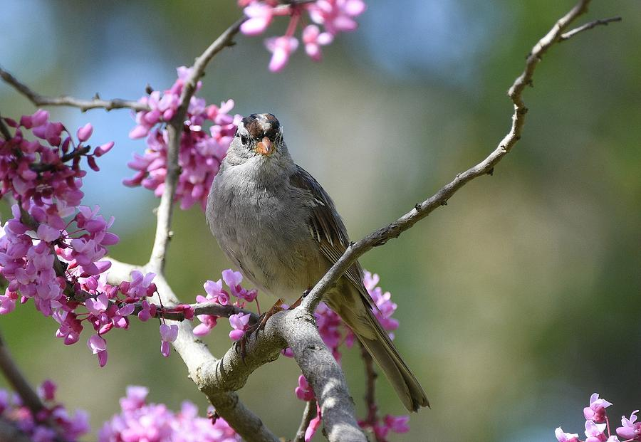 Birds And Blossoms by Fraida Gutovich