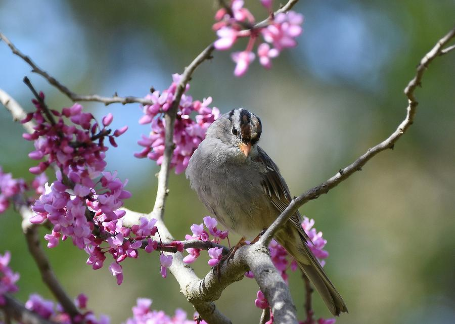 Birds And Blossoms 2 by Fraida Gutovich