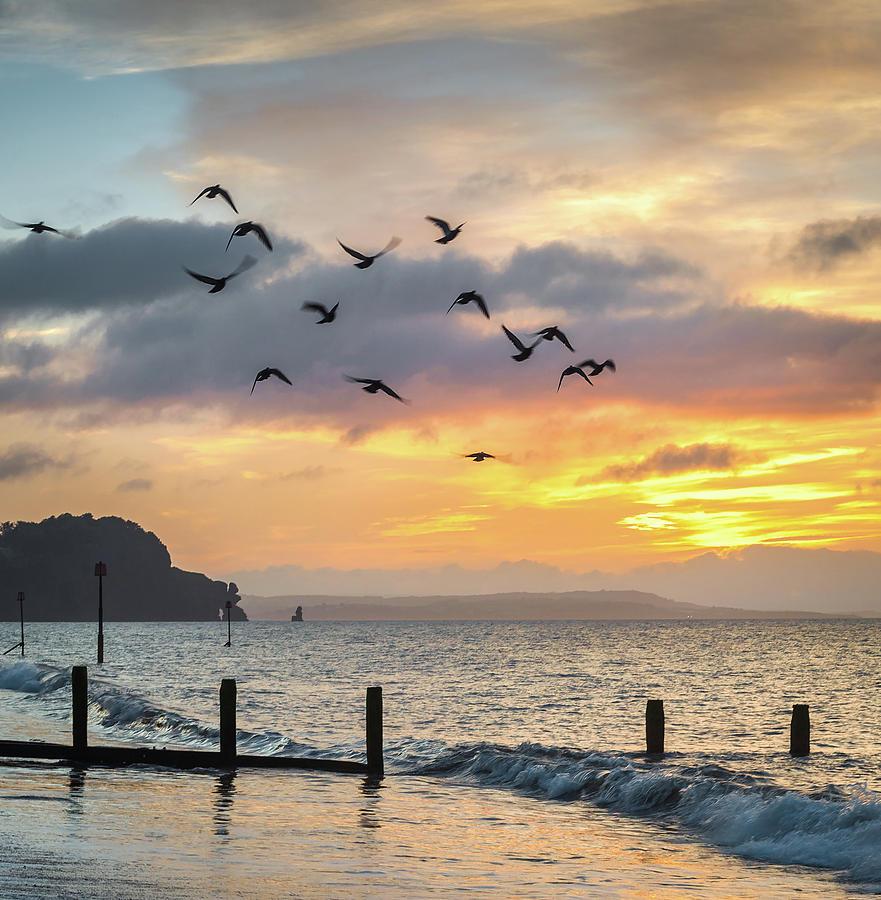 Birds Photograph - Birds at Sunrise by A J Paul