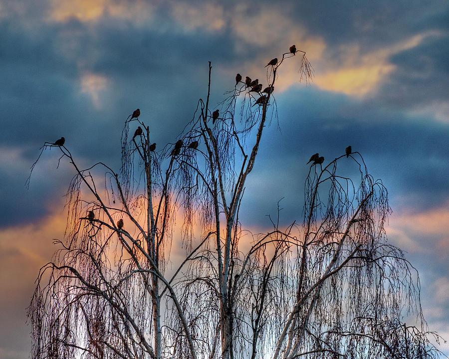 Birds at Sunset by John Rodrigues