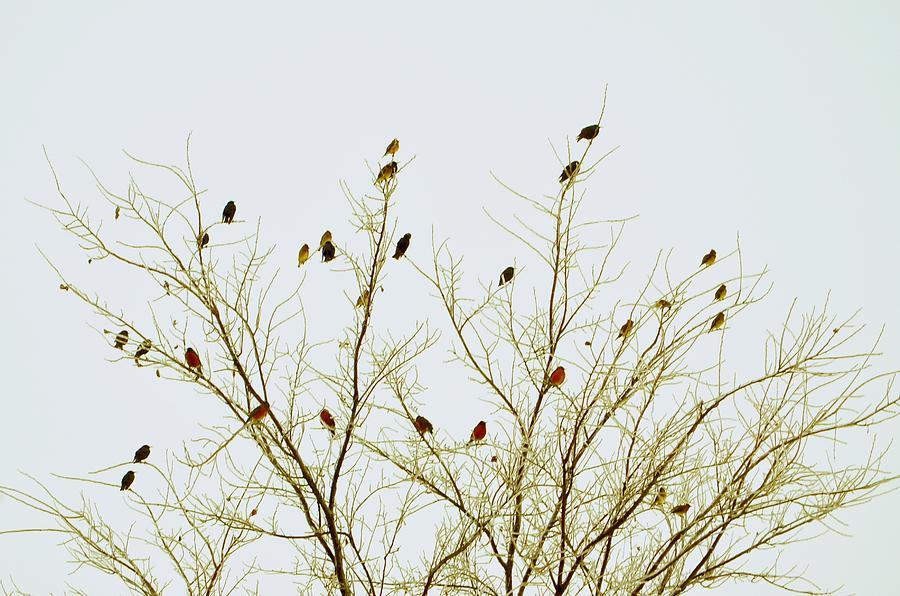 Birds Photograph by E Murray