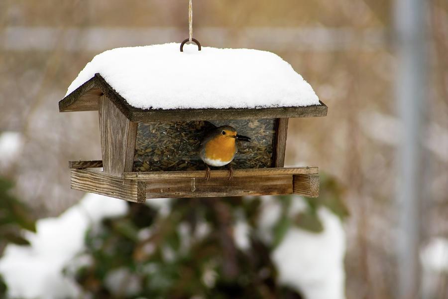 Birds Feeder Photograph by Focuseye