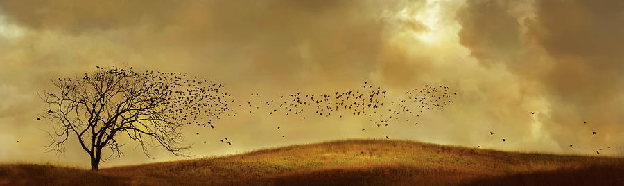 Birds Flying To Bare Tree In Rural Photograph by Chris Clor