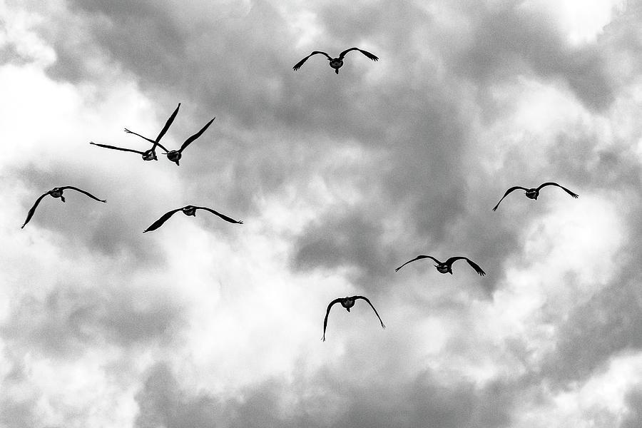 Birds Photograph - Birds in Flight by Lonnie Paulson
