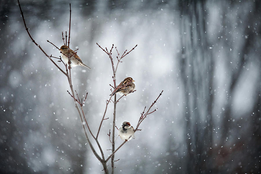 Birds In Snow Photograph by Winterwood Photography