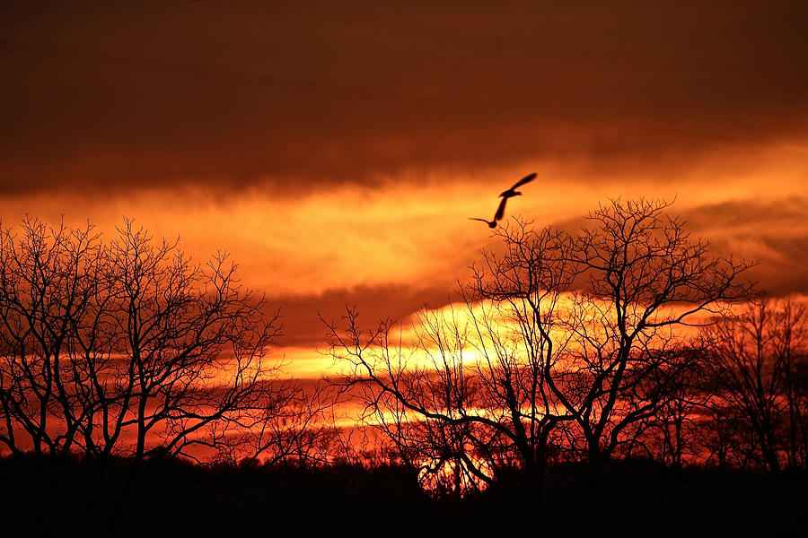 Birds in the sunset by Donna Quante