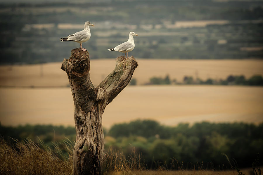 Birds of a Feather by Chris Boulton