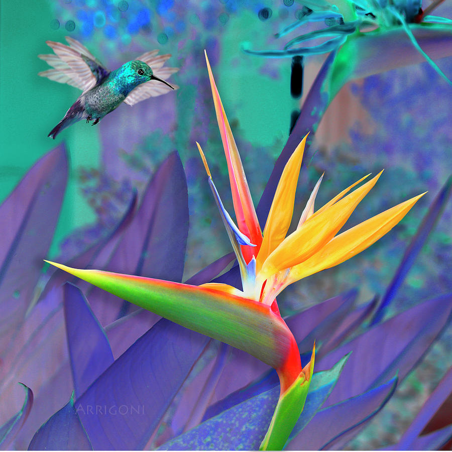 Birds of Paradise, Blue by David Arrigoni