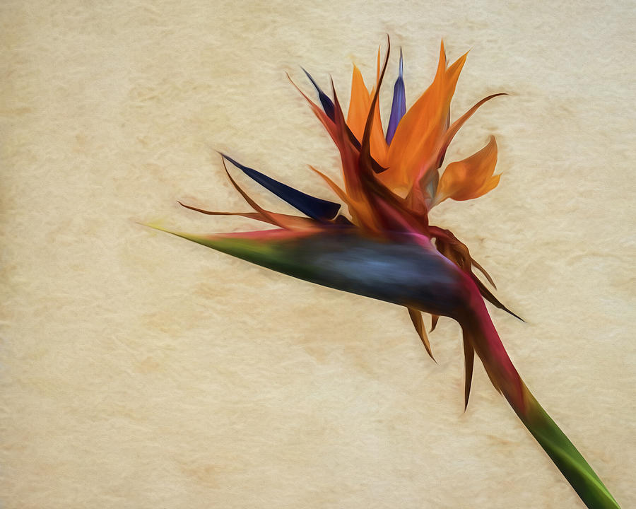 Birds-of-Paradise Flower by Wade Brooks