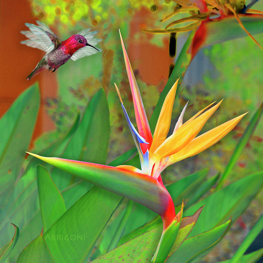 Birds of Paradise, Green by David Arrigoni