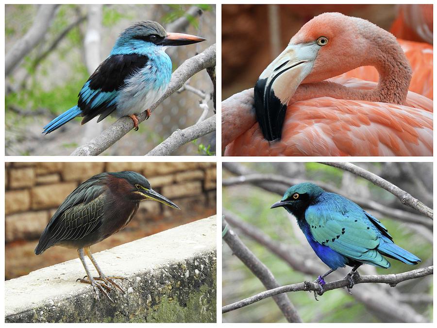 Birds of the San Antonio Zoo by Krin Van Tatenhove