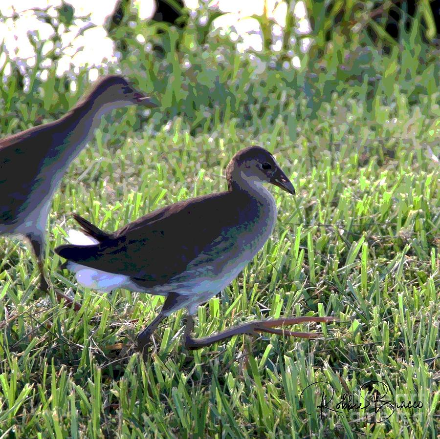 Birds of Venetian Gardens. Come With Me Little Brother by Philip and Robbie Bracco